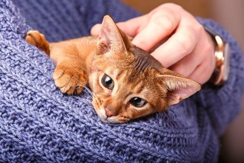 セーターを着た飼い主に抱かれている猫