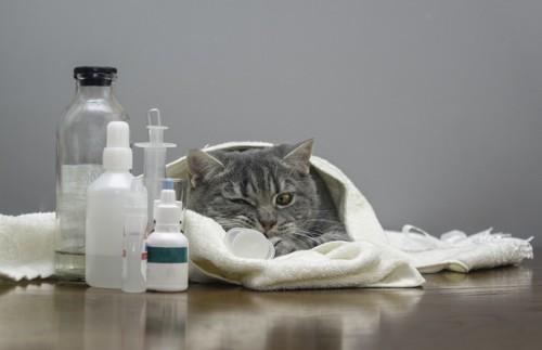 風邪の薬と猫