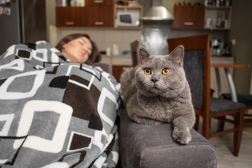 寝る飼い主と猫