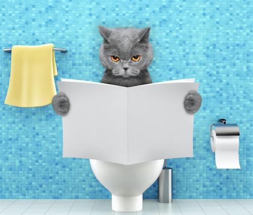 人間のように本を読みながらトイレに座る猫