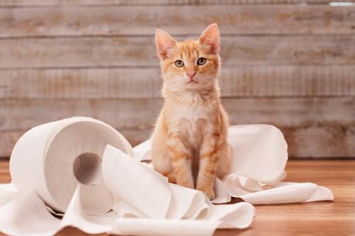 猫と散らかったトイレットペーパー