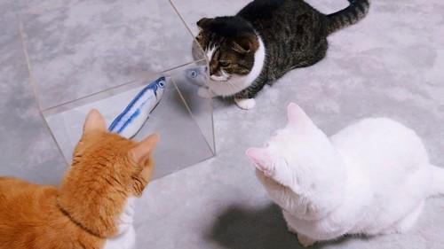 箱を見つめる3匹の猫