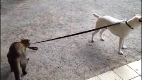 リードをくわえる猫