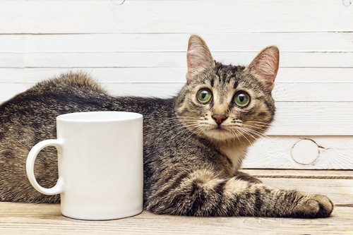 マグカップのそばでくつろぐ猫