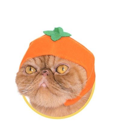 ねこフルーツちゃん柿