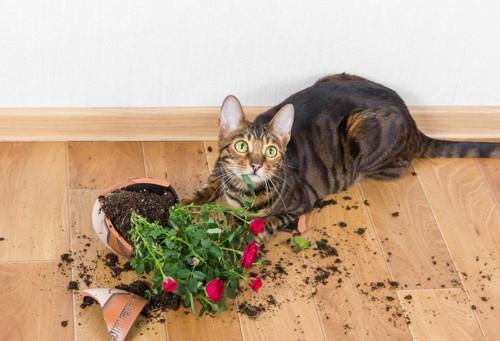 花瓶にいたずらする猫