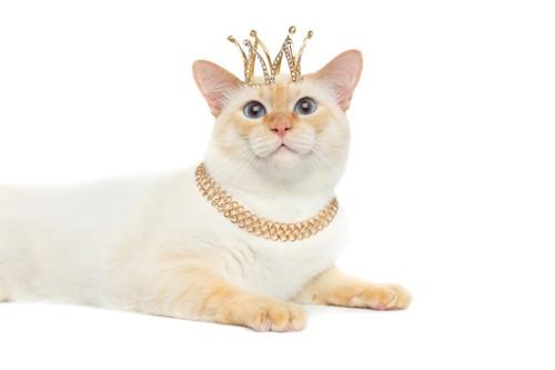 ティアラとネックレスをした猫