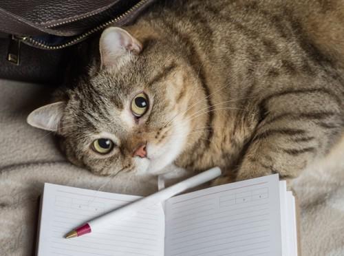 猫とノートとペン