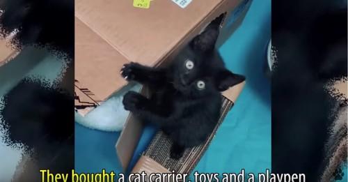 段ボール箱と黒猫