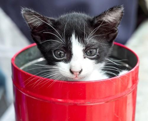 缶の中の猫