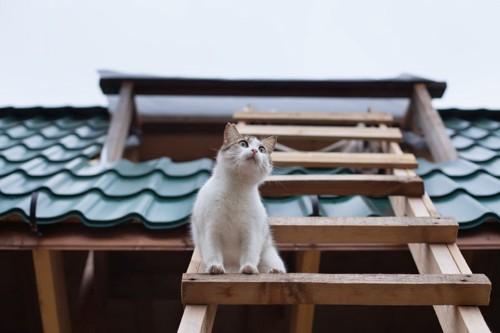 屋根の上に乗る猫