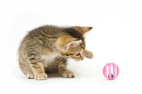 おもちゃで遊ぼうとする子猫