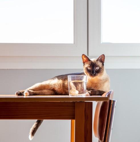 コップの水と猫