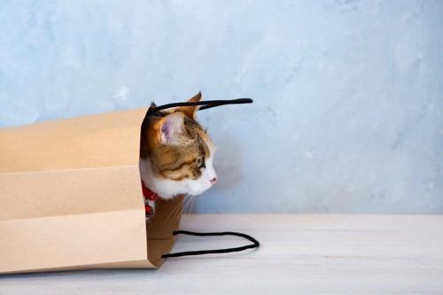 紙袋に入っている猫