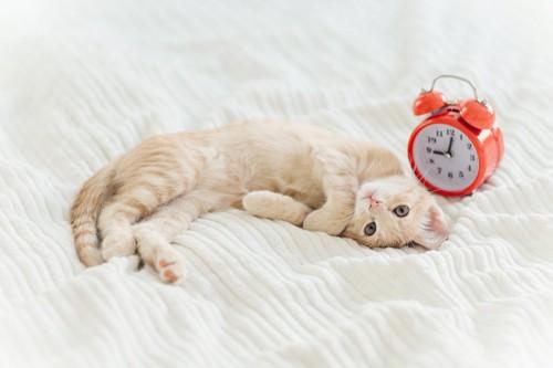 目覚まし時計と寝転んだ子猫
