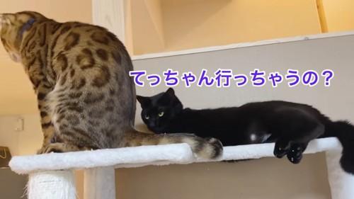 おすわりする茶色の猫