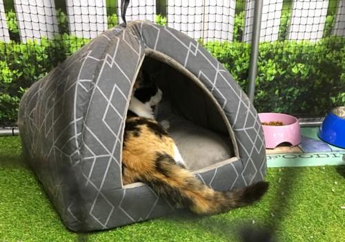 猫用ベッドの中の三毛猫