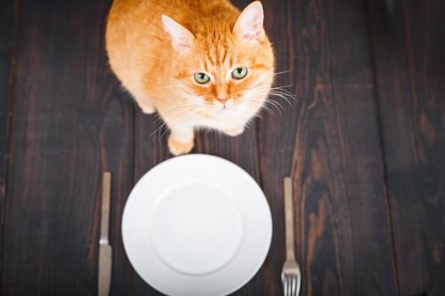 お皿とナイフとフォークの前に座る猫