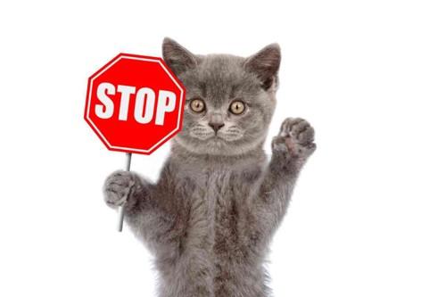 STOPサインを持つ猫