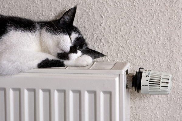 ヒーターの上で寝る黒白猫