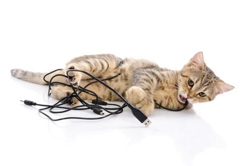 ケーブルをかむ子猫