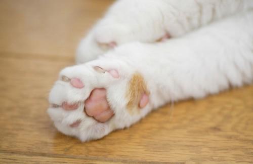 ピンクの肉球の猫