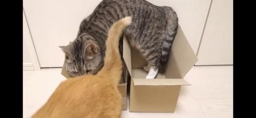 隣の箱に移る猫