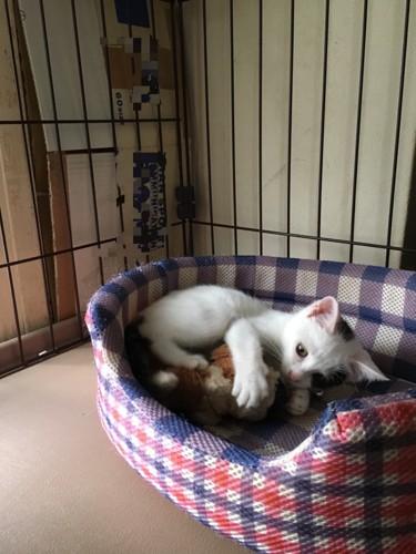 ベットの中で遊ぶ猫