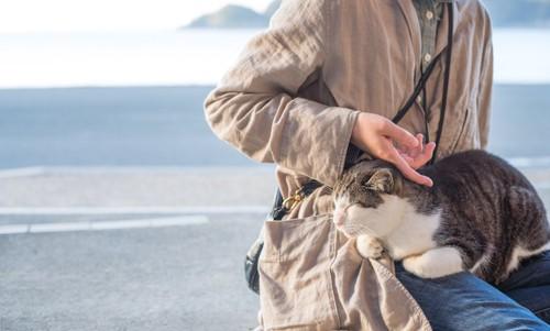 人の膝の上で甘える猫