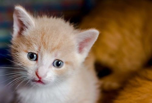 ジッとこちらを見つめる子猫
