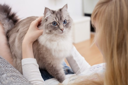 飼い主の膝の上で保定されている猫