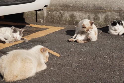 駐車場でくつろぐ野良猫たち