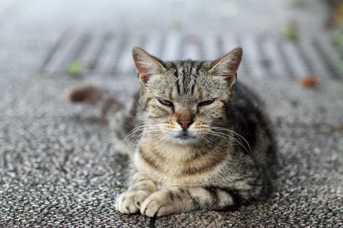 不機嫌そうな顔をした野良猫