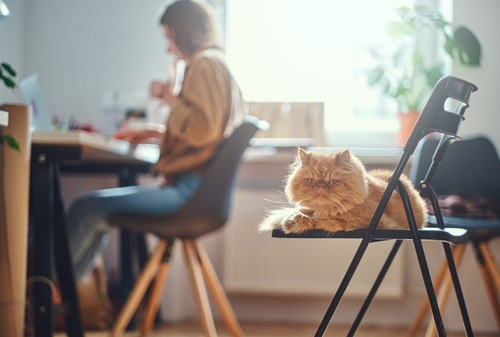 椅子に乗った猫とデスクの女性
