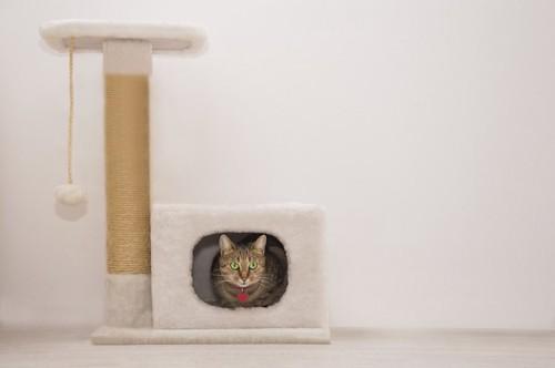 キャットタワーのハウスに入った猫