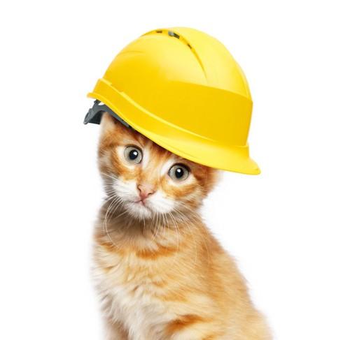 ヘルメットをかぶる猫