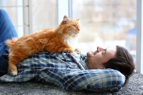 寝転ぶ男性のお腹の上に乗る猫