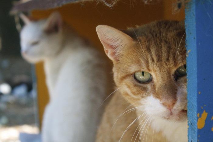 陰から見る猫