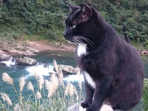 白黒の猫と川