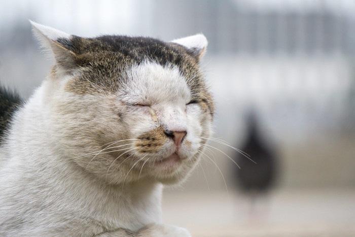 目をつむる野良猫