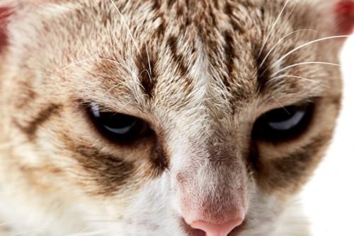 猫の顔のつむじ