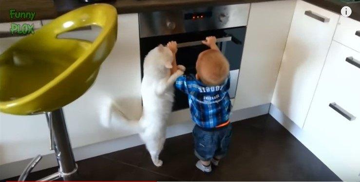 立ち上がって幼児の腕にしがみつく猫
