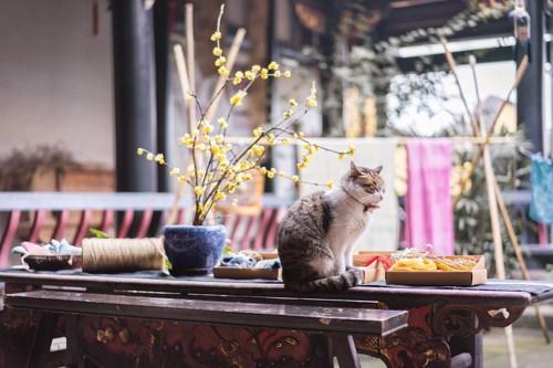 テーブルに座る猫