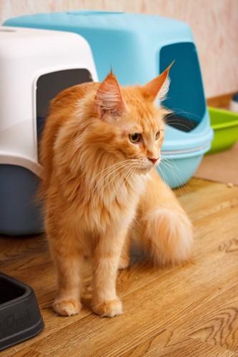 並んで置かれたトイレの隣に座る猫