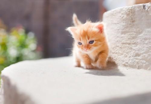 ふみふみする子猫