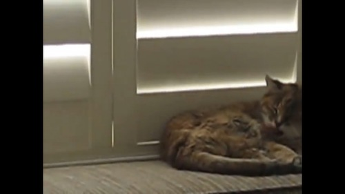 窓を閉める猫