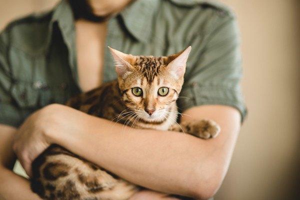 抱っこされる茶色い猫