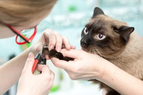 トリマーを見つめる猫