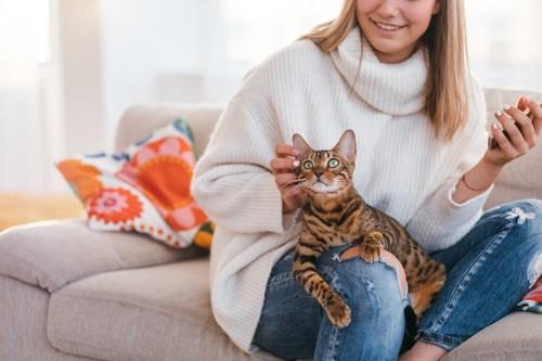 飼い主の膝の上で頬を撫でられるベンガル猫