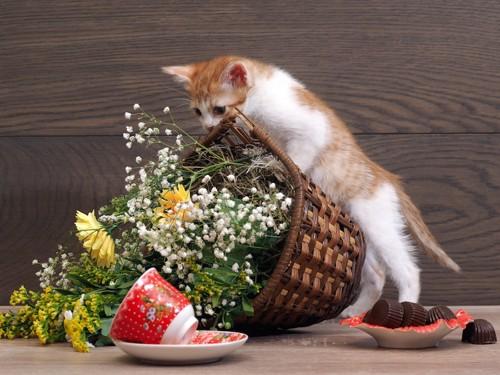 鉢植えやカップを倒す子猫